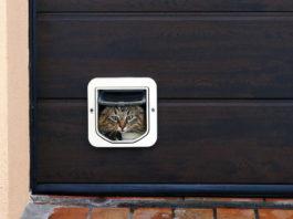 kattenluik plaatsen