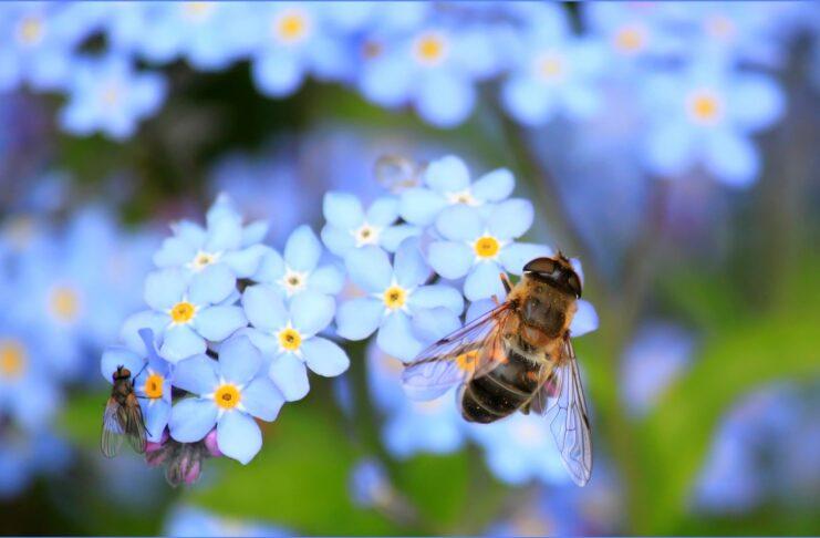bijen aan een bloem